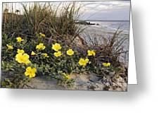 Beach Evening Primrose On Folly Beach - D001782 Greeting Card