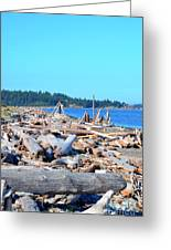 Beach Of Logs Greeting Card