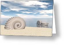 Beach Of Shells Greeting Card