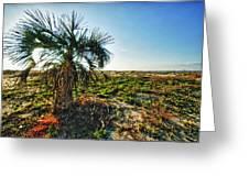 Beach Palm Morning Greeting Card