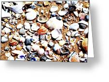 Beach Shells Greeting Card