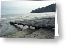 Beach Wood Greeting Card