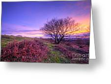 Beacon Hill Sunrise 1.0 Greeting Card