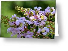 Beaded Lavender Lace Greeting Card