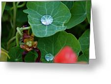 Beads Of Life Greeting Card