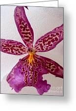Beallara Marfitch - Howard's Dream - Orchid Greeting Card