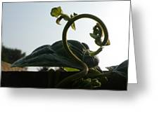 Bean Tendril In The Mist Greeting Card
