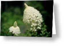 Bear Grass Blooms Greeting Card