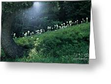 Bear-grass Ridge Greeting Card