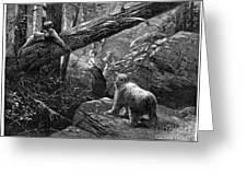 Bear Hunt, 1876 Greeting Card by Granger