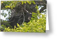 Bear In A Tree Greeting Card