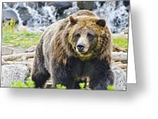 Bear On The Prowl. Greeting Card