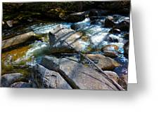 Bear River 2 Greeting Card