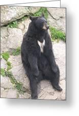 Bear Sitting On A Rock Greeting Card