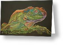 Bearded Dragon Greeting Card by Stephanie L Carr