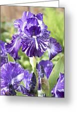 Bearded Iris Iris Germanica Batik Greeting Card