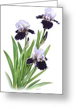 Bearded Iris Trio Greeting Card