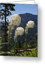 Beargrass Squaw Grass - 4 Greeting Card