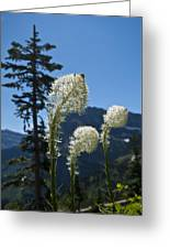 Beargrass Squaw Grass 2 Greeting Card
