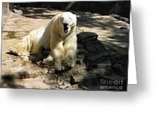 Bearly Staying Awake. Yaaaaawwwnn... Greeting Card