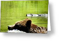 Bearly Swim Greeting Card