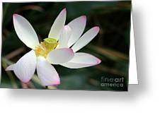 Beatutiful Wet Lotus Greeting Card