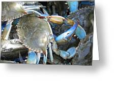Beaufort Blue Crabs Greeting Card