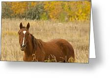 Beautiful Chestnut Horse Greeting Card