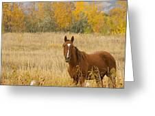 Beautiful Grazing Horse Greeting Card
