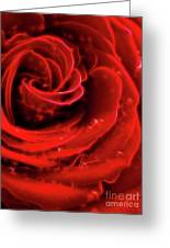Beautiful Abstract Red Rose Greeting Card by Oleksiy Maksymenko