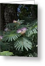 Beautiful Alabama Mimosa Silk Tree Greeting Card