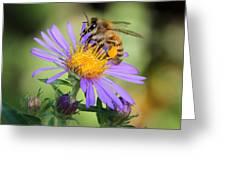 Beautiful Bee Greeting Card