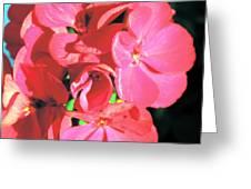 Beautiful Begonia Greeting Card by Lorraine Louwerse