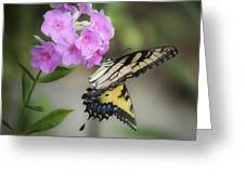 Beautiful Butterfly Greeting Card