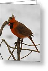 Beautiful Cardinal Greeting Card