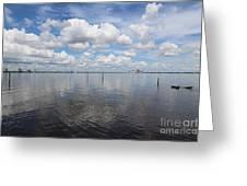 Beautiful Day In Tampa Greeting Card