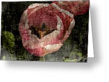 Beautiful Decay Greeting Card