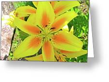 Beautiful Dreamer Greeting Card