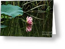 Beautiful Fallen Lotus Greeting Card