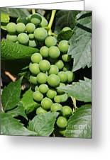 Beautiful Grapes Greeting Card