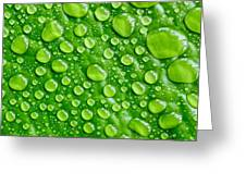 Beautiful Green Leaf With  Water Drops Greeting Card
