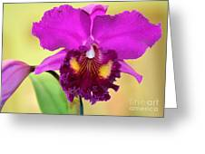 Beautiful Hot Pink Orchid Greeting Card