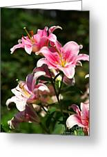 Beautiful Lilys Greeting Card