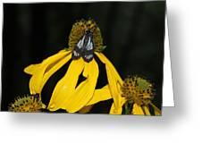 Beautiful Moth Ser2 Greeting Card