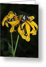 Beautiful Moths Ser1 Greeting Card