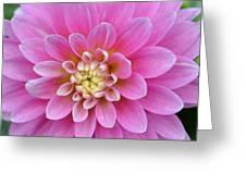 Beautiful Pink Dahlia Flower Greeting Card