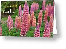 Beautiful Pinks Greeting Card