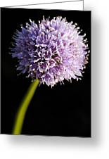 Beautiful Purple Flower With Black Background Greeting Card