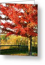 Beautiful Red Maple Tree  Greeting Card