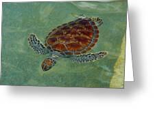 Beautiful Sea Turtle Greeting Card